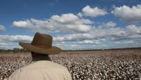 Sydney barrister Peter King says a royal commission into banks' treatment of farmers is needed. Photo: Peter Braig