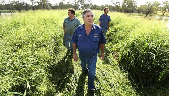 Farmer Rowell Walton, centre, with sons Robert, left, and Gavin, walks through the family property near Condamine, Queensland. Picture: Lyndon Mechielsen Source: News Corp Australia